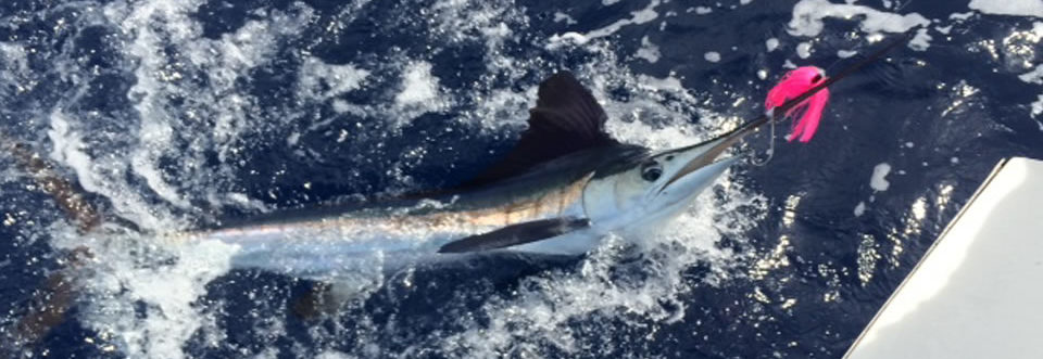 Big catch at sea