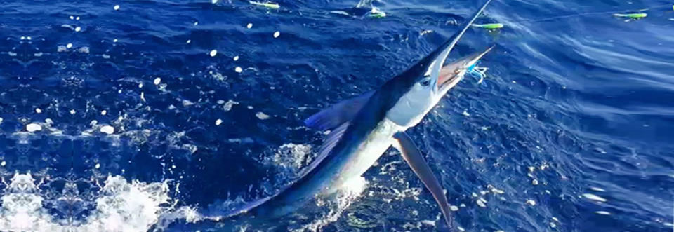 Boynton Beach Sailfish, Wahoo, Mahi Mahi, & Swordfish fishing